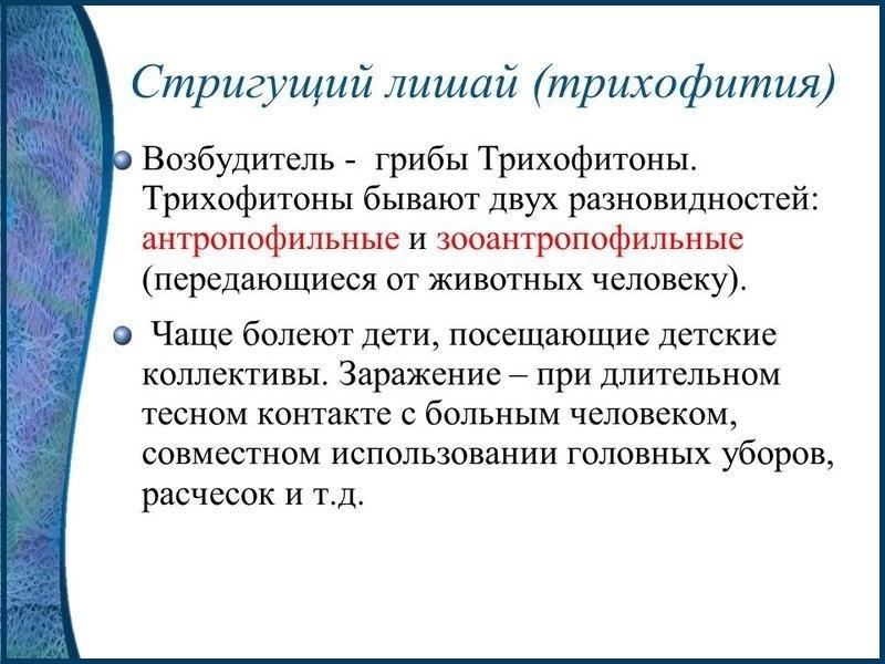 трихофития