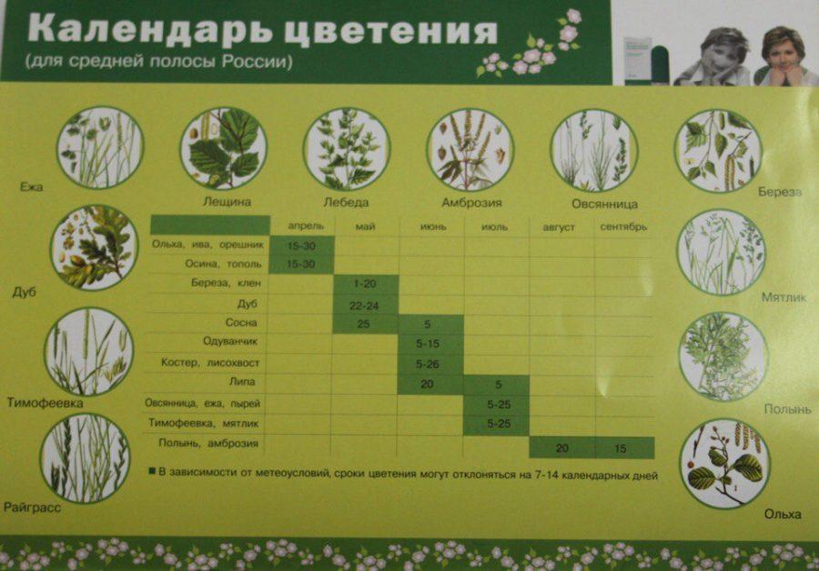 календарь цветания аллергенов