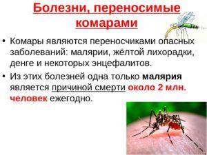 комары переносчики