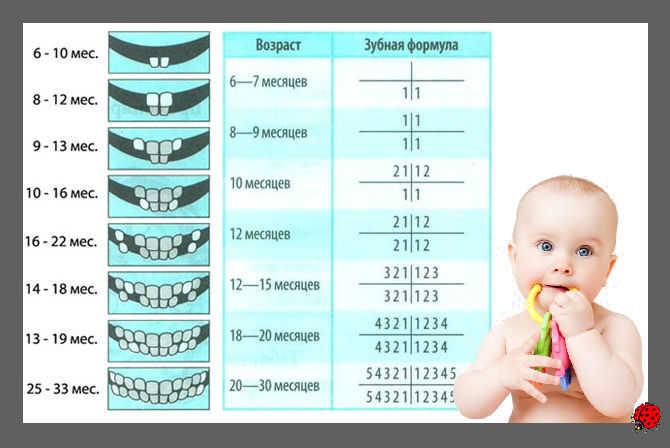 формула зубов +у детей
