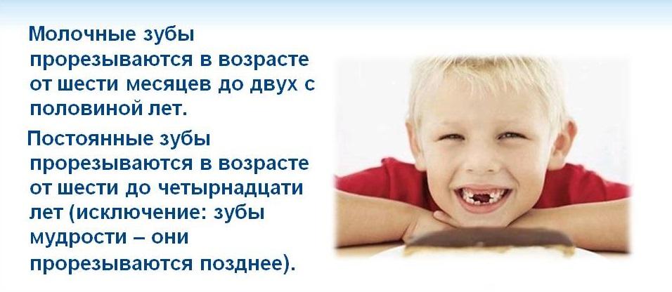Cколько молочных зубов у детей должно быть